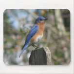 Varón del este Mousepad del Bluebird