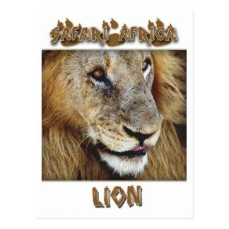 Varón del león - postales del safari de la fauna