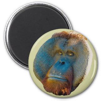 Varón del orangután iman