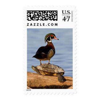 Varón del pato de madera que se coloca en el sellos