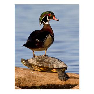 Varón del pato de madera que se coloca en el tarjeta postal