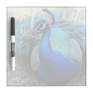 Varón del pavo real en la cabeza de tierra dada pizarras blancas de calidad