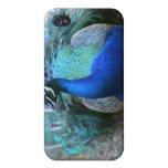 Varón del pavo real en la cabeza de tierra dada vu iPhone 4 funda