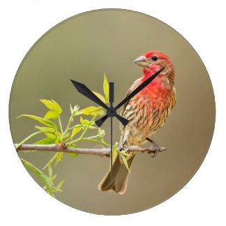 Varón del pinzón de casa (Carpodacus Mexicanus) Reloj Redondo Grande