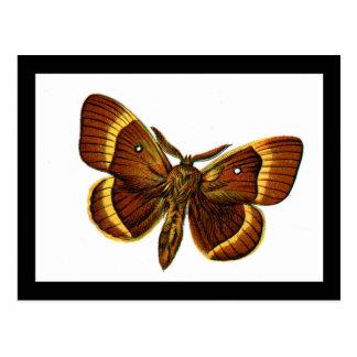 Varón del quercus del bómbice tarjeta postal