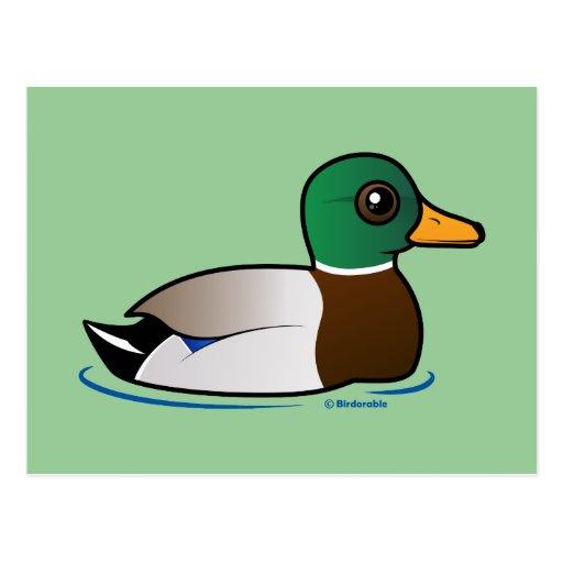 Varón lindo del pato silvestre tarjetas postales