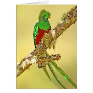 Varón resplandeciente del quetzal tarjeta de felicitación
