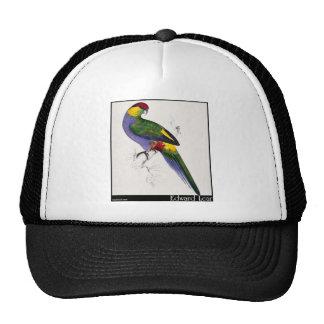 Varón Rojo-Capsulado del Parakeet de Edward Lear Gorro