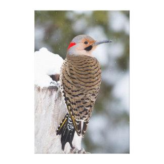 Varón septentrional del parpadeo en invierno impresiones en lona estiradas