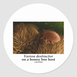 Varroa destructor On A Honey Bee Host Classic Round Sticker