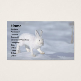 Varying Hare/Snowshoe Rabbit on open snow Business Card