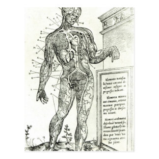 Vascular System according to Charles Etienne Postcard