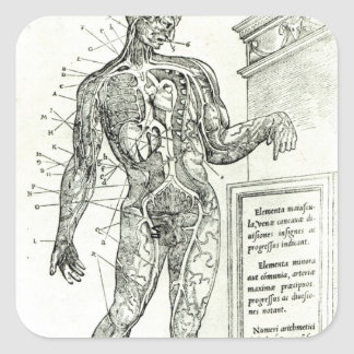 Vascular System according to Charles Etienne Square Sticker