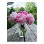 Vase of Pink Peonies Postcard
