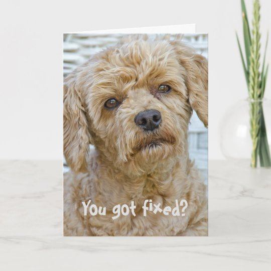 Vasectomy Dog Humor Card