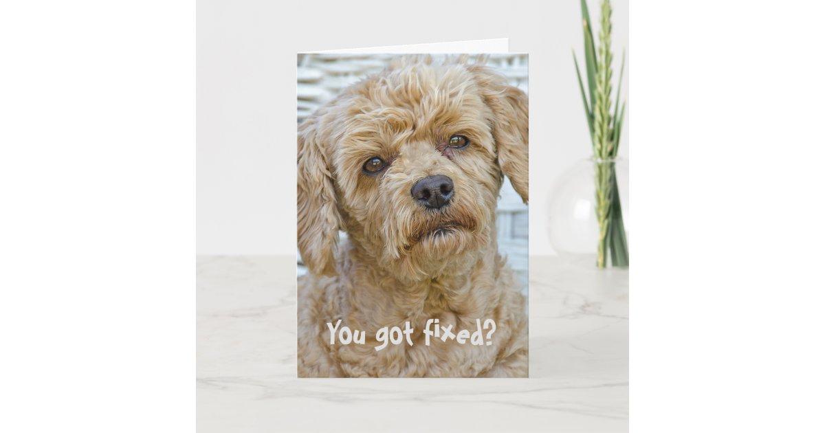 Vasectomy Dog Humor Card | Zazzle com