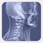 Vasos sanguíneos de la cabeza y del cuello calcomania cuadradas