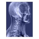 Vasos sanguíneos de la cabeza y del cuello tarjetas postales