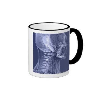 Vasos sanguíneos de la cabeza y del cuello taza de café