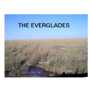 VASTNESS OF THE EVERGLADES POSTCARD