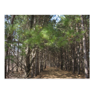 Vea el bosque a través de los árboles postales