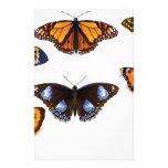 Vector de las mariposas papeleria personalizada
