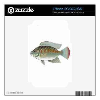 Vector de los pescados de la Tilapia de los Calcomanías Para El iPhone 2G