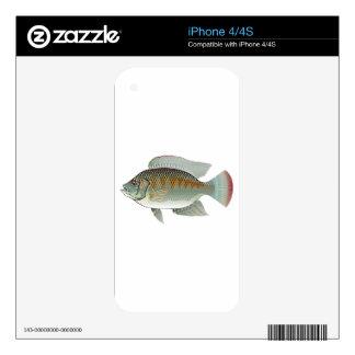 Vector de los pescados de la Tilapia de los Calcomanías Para El iPhone 4S