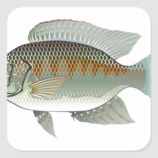 Vector de los pescados de la Tilapia de los Pegatina Cuadrada