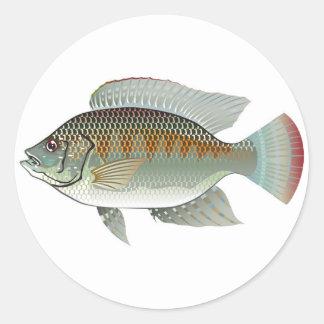 Vector de los pescados de la Tilapia de los Pegatina Redonda