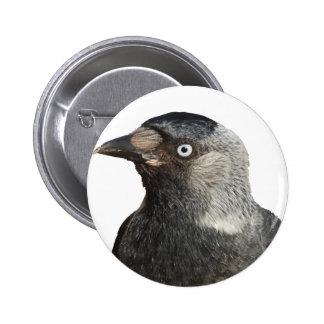 Vector del retrato del pájaro del grajo pin redondo de 2 pulgadas
