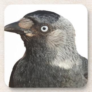 Vector del retrato del pájaro del grajo posavasos de bebidas