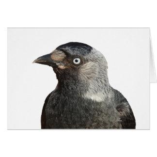 Vector del retrato del pájaro del grajo tarjeta de felicitación