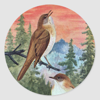 Veeries in a Coniferous Forest Classic Round Sticker