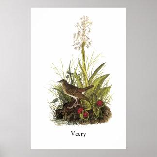 Veery, John Audubon Poster