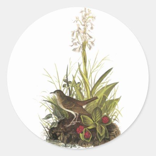 Veery, John Audubon Sticker