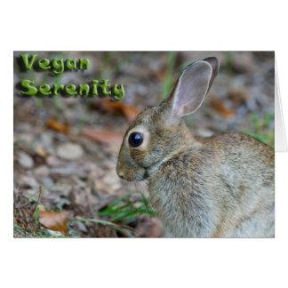 Vegan Serenity Bunny Cards