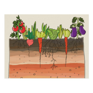 Vegetable garden soil earth layers nature art postcard
