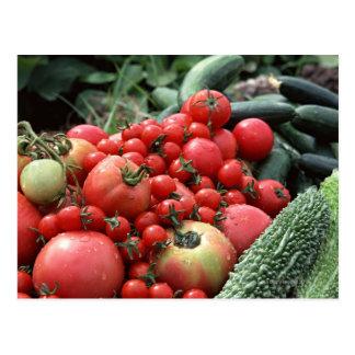 Vegetables 4 postcard