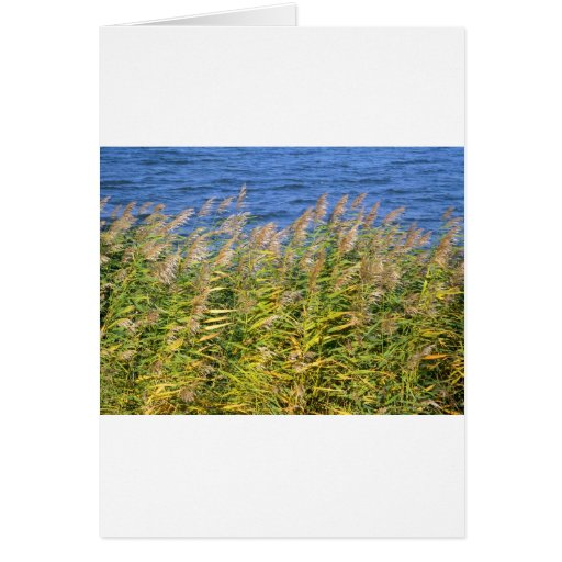 vegetación del lago felicitación