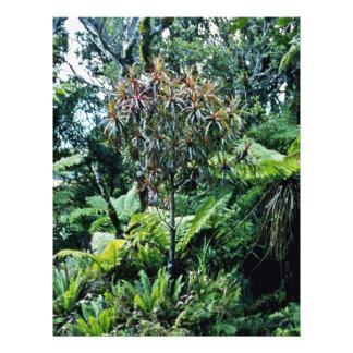 Vegetation, Moehau Mountain, Coromandel Peninsula Flyer Design