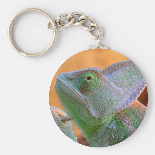 Veiled Chameleon Basic Round Button Keychain
