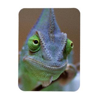 Veiled Chameleon Magnet