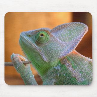 Veiled Chameleon Mouse Pad