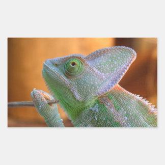 Veiled Chameleon Rectangular Sticker