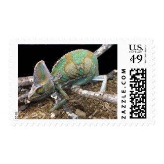 Veiled Chameleon – The Ultimate Conehead Postage