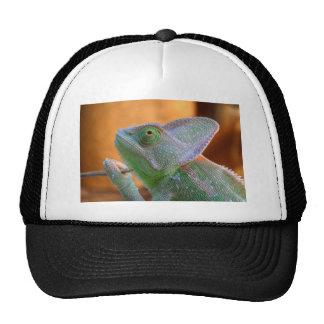 Veiled Chameleon Trucker Hat