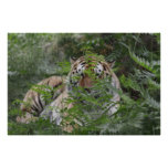 Veiled Tiger Posters