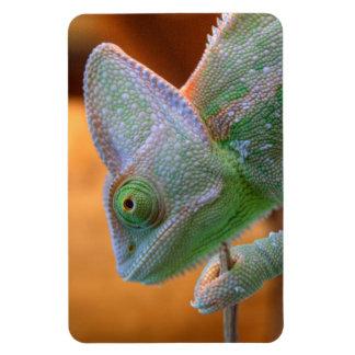 Veiled Yemen Chameleon Magnet