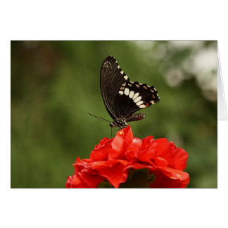 Veined Swallowtail Card